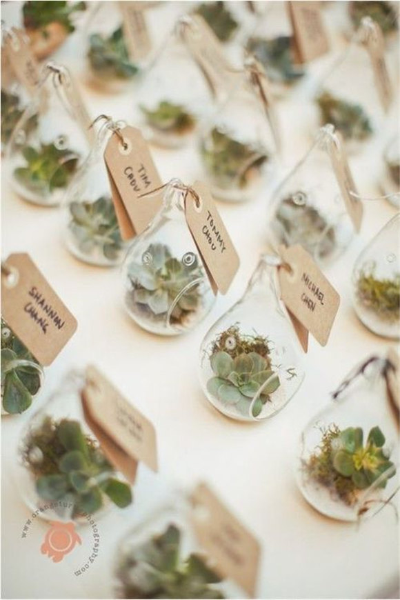 Succulent Wedding Decor and favors