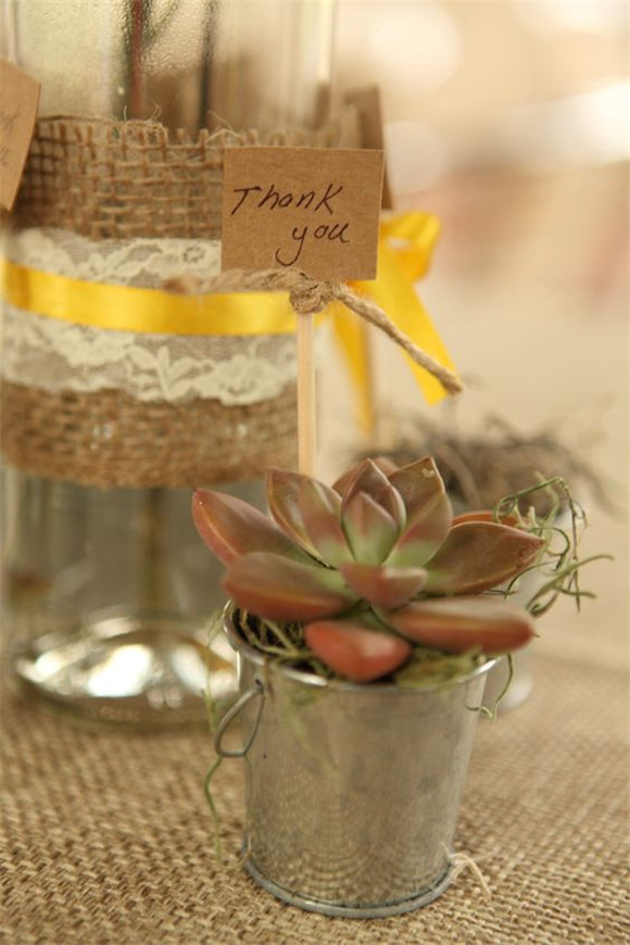 4 succulents! Rustic, chic, affordable wedding favor!